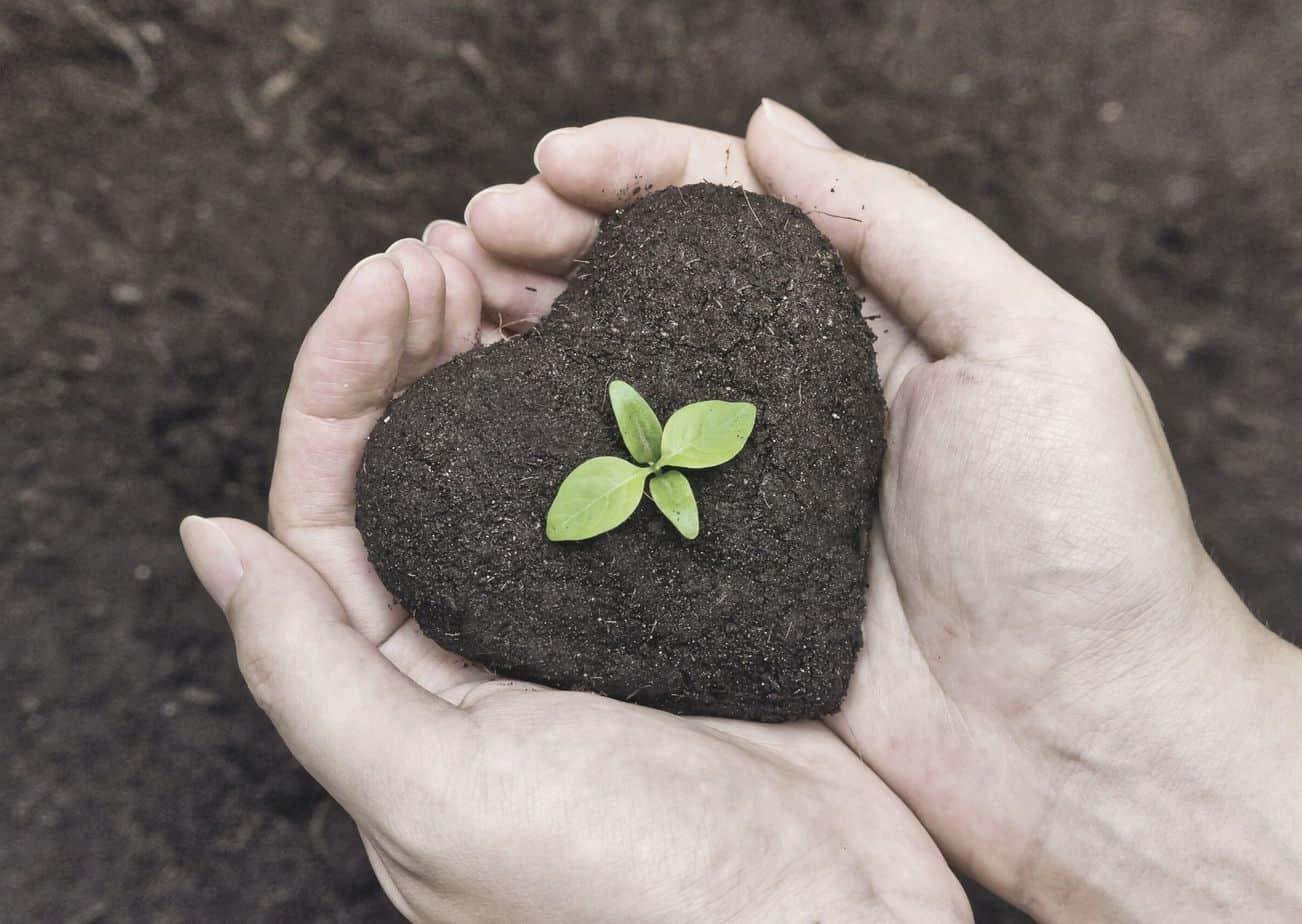 Menanam pohon sebagai bentuk investasi akhirat di dunia