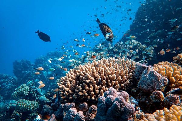dampak perubahan iklim hewan punah dan ganggu ekosistem