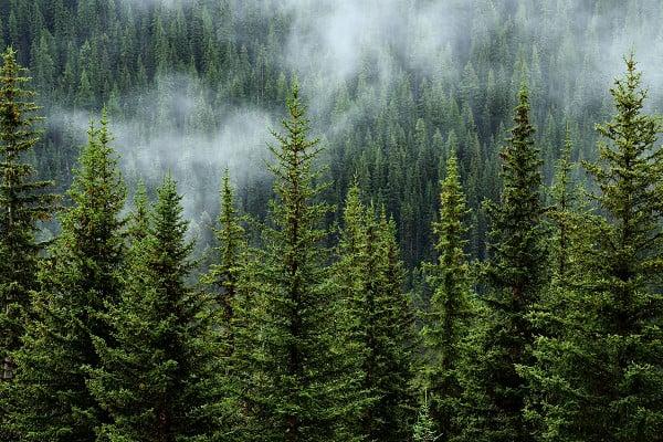 wakaf hutan salah satu bentuk wakaf energi atas perubahan iklim